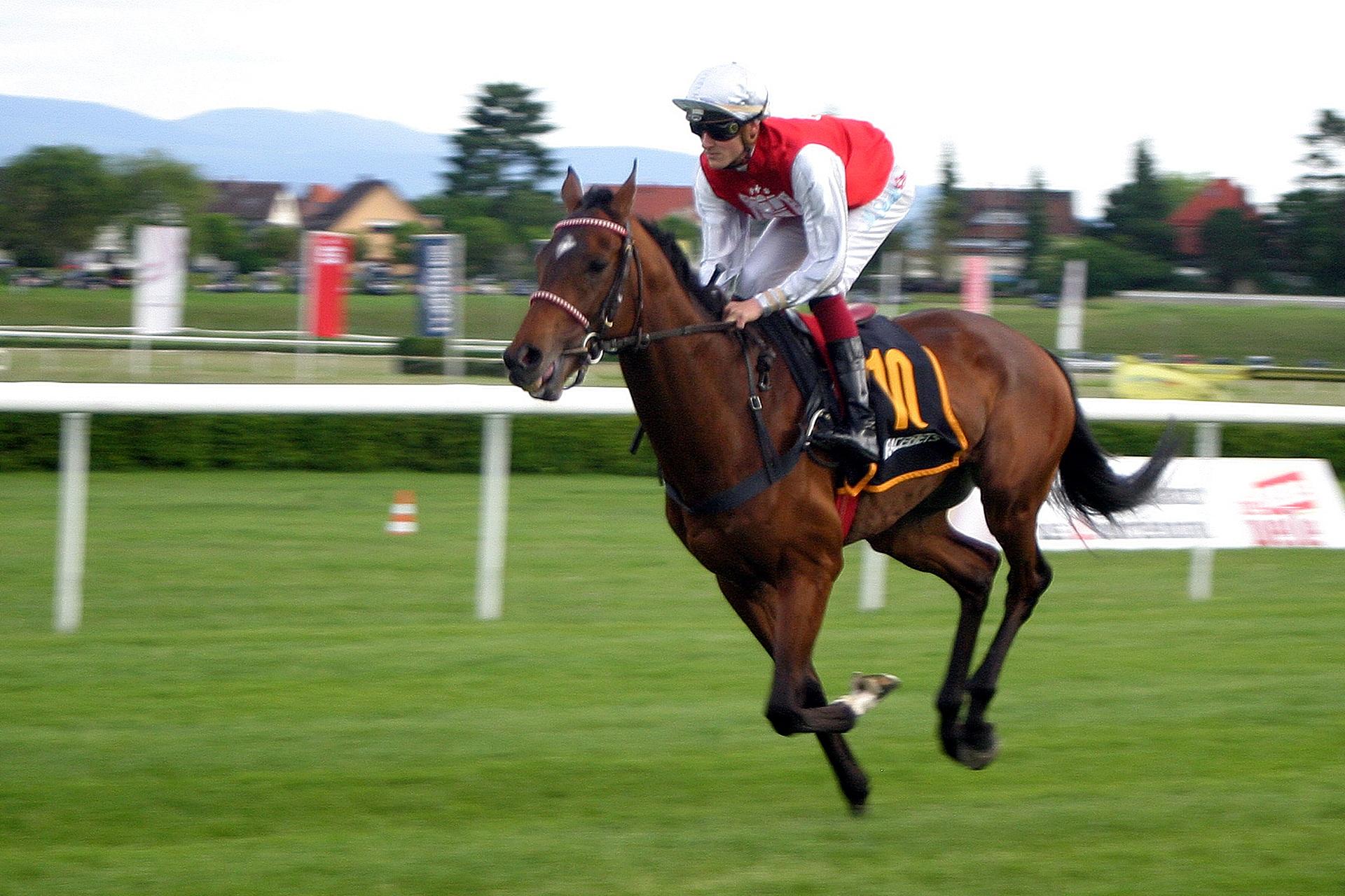horse-racing-2714849